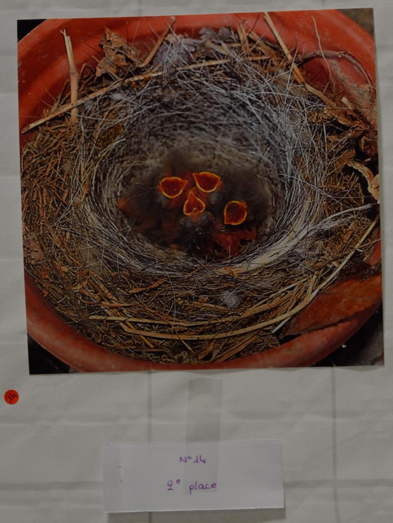 Le nid de bergeronnettes se place en deuxième.